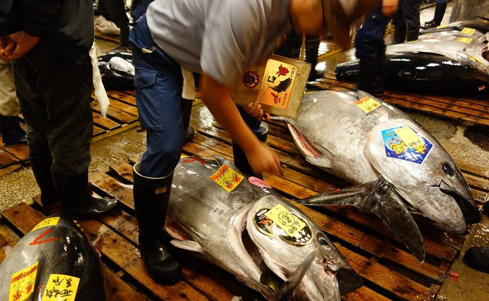 """$1.8M Tuna to """"Affordable"""" $1 Tuna Sushi—The Mystery of Japanese Tuna Industry"""