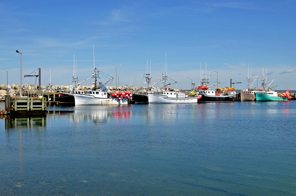 世界の大手水産企業が持続可能性にコミット!「海洋管理のための水産事業」