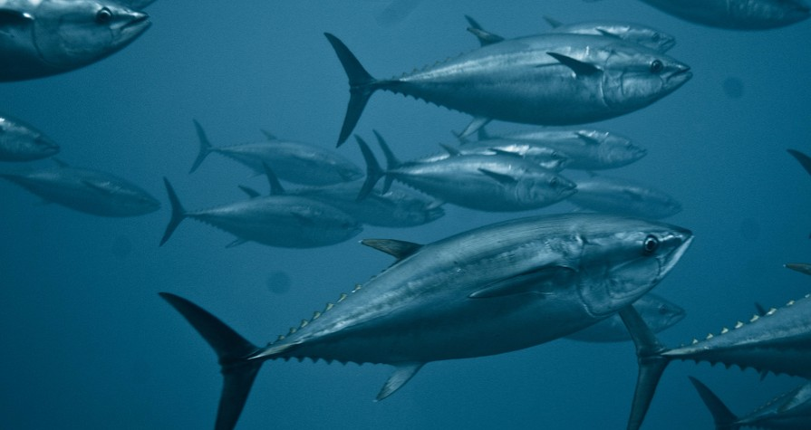 "Understanding The Tokyo 2020 ""Sustainable Sourcing Code for Fishery Products"""