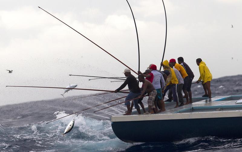 モルディブ一本釣りカツオのMSC認証取得 〜国を挙げた伝統漁業の保護とブランディング〜