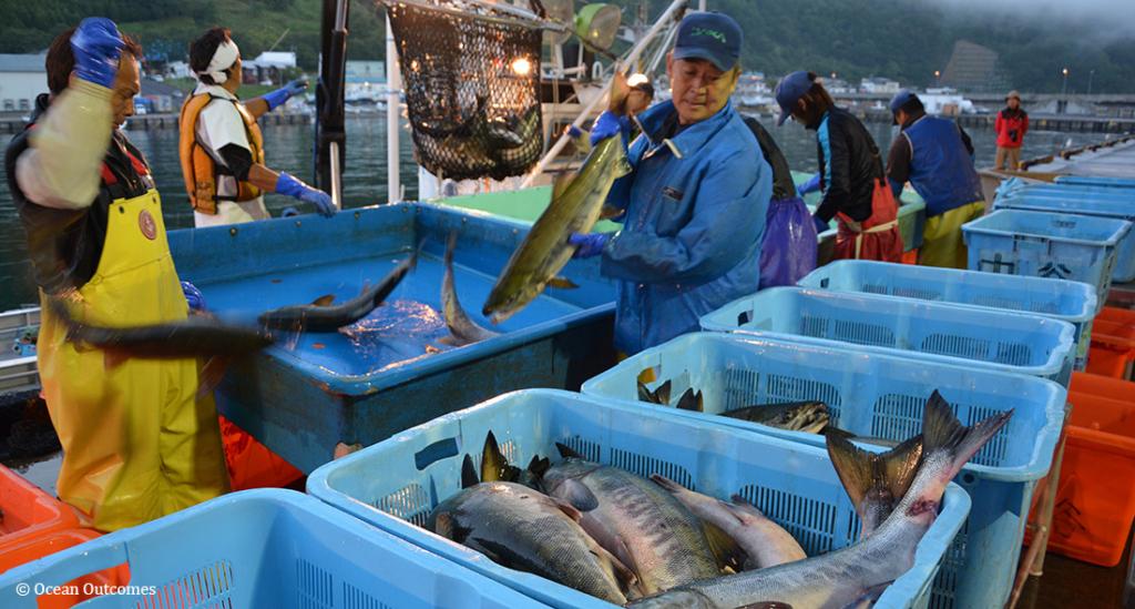 成功事例 ―北海道 世界最大のシロサケ漁業を再展望する