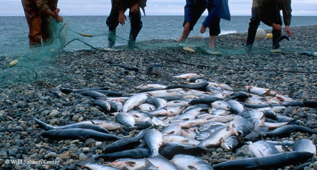 成功事例ー北東サハリン 極東ロシアにおける密漁撲滅に向けて