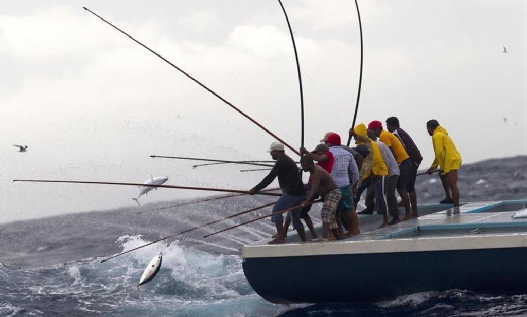 1000年続く モルディブ一本釣り漁業が切り拓く 三方良しブランディング